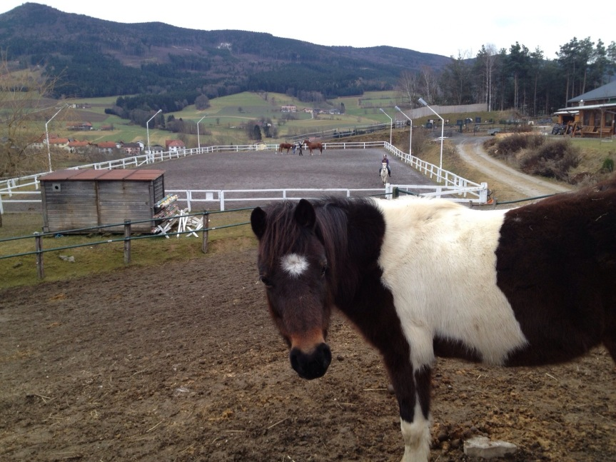 騎馬與度假